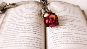 biblioteca de roses_640x463